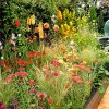 Fiery planting border